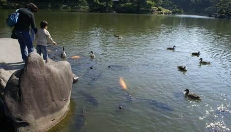 母の介護と車椅子での散歩風景・清澄庭園kiyosumi07.jpg