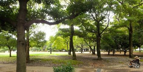 2013.10.22.母の介護と車椅子での散歩風景・清澄公園