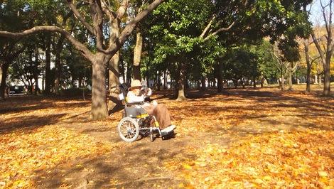 251126-2kiyosumi.JPG母の介護と車椅子での散歩風景・清澄公園の写真2