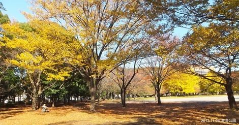 251126kiyosumikouen.JPG母の介護と車椅子での散歩風景・清澄公園の写真