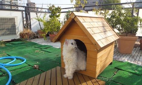 250920-0我が家の屋上防水シート工事を写真で公開しています。屋上防水シート改修工事.JPG