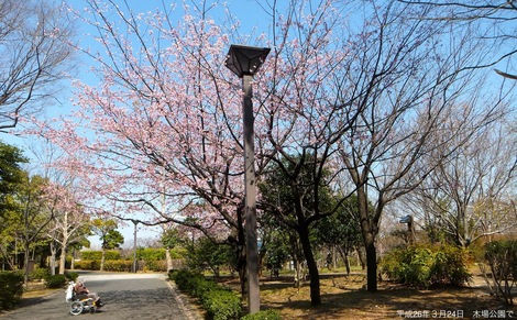 260324hiba-2.JPG母の介護と車椅子での散歩風景2
