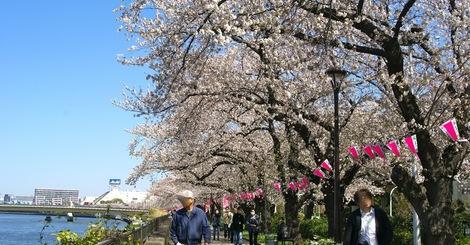 260331sakura-14.JPG・母の介護と車椅子での散歩風景・隅田川の桜橋