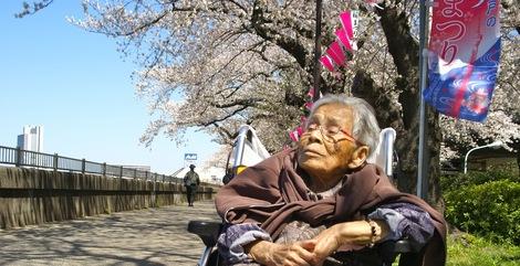 260331sakura-15.JPG・母の介護と車椅子での散歩風景・隅田川の桜橋