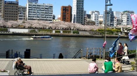 260331sakura-16.JPG・母の介護と車椅子での散歩風景・隅田川の桜橋