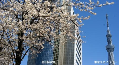 260331sakura-17.JPG・母の介護と車椅子での散歩風景・隅田川の桜橋