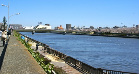 260331sakura-2.JPG・母の介護と車椅子での散歩風景・隅田川の桜橋