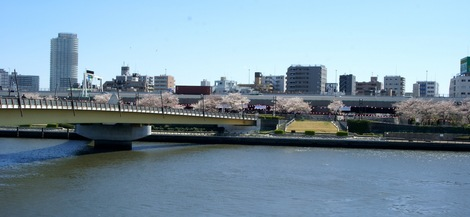 260331sakura-5.JPG・母の介護と車椅子での散歩風景・隅田川の桜橋