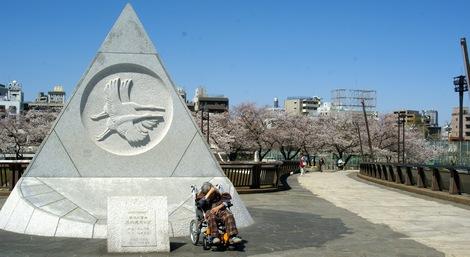 260331sakura-7.JPG・母の介護と車椅子での散歩風景・隅田川の桜橋
