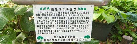 260428hibiya-8.JPG日比谷公園を散歩