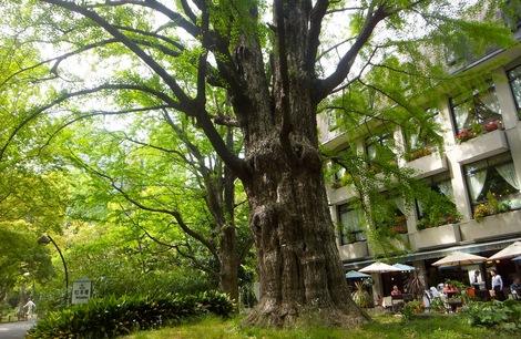 260428hibiya-9.JPG日比谷公園を散歩