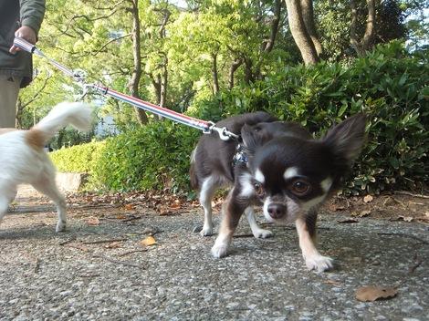 260509bibi1500-2.JPGわんちゃん散歩中