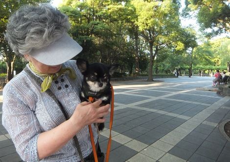 260808momo6.JPG・わんちゃん散歩中・モモちゃん
