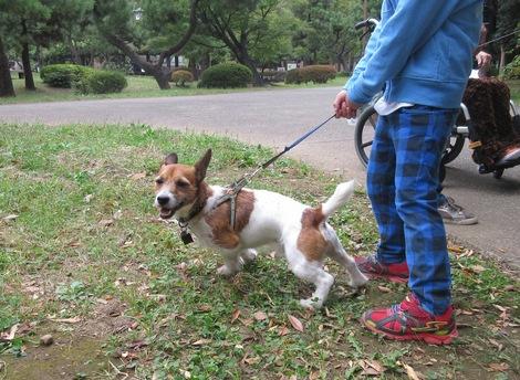151010soi-3.JPGわんちゃん散歩中と母の介護と車椅子での散歩風景